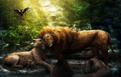 Familia de felinos - Lions family