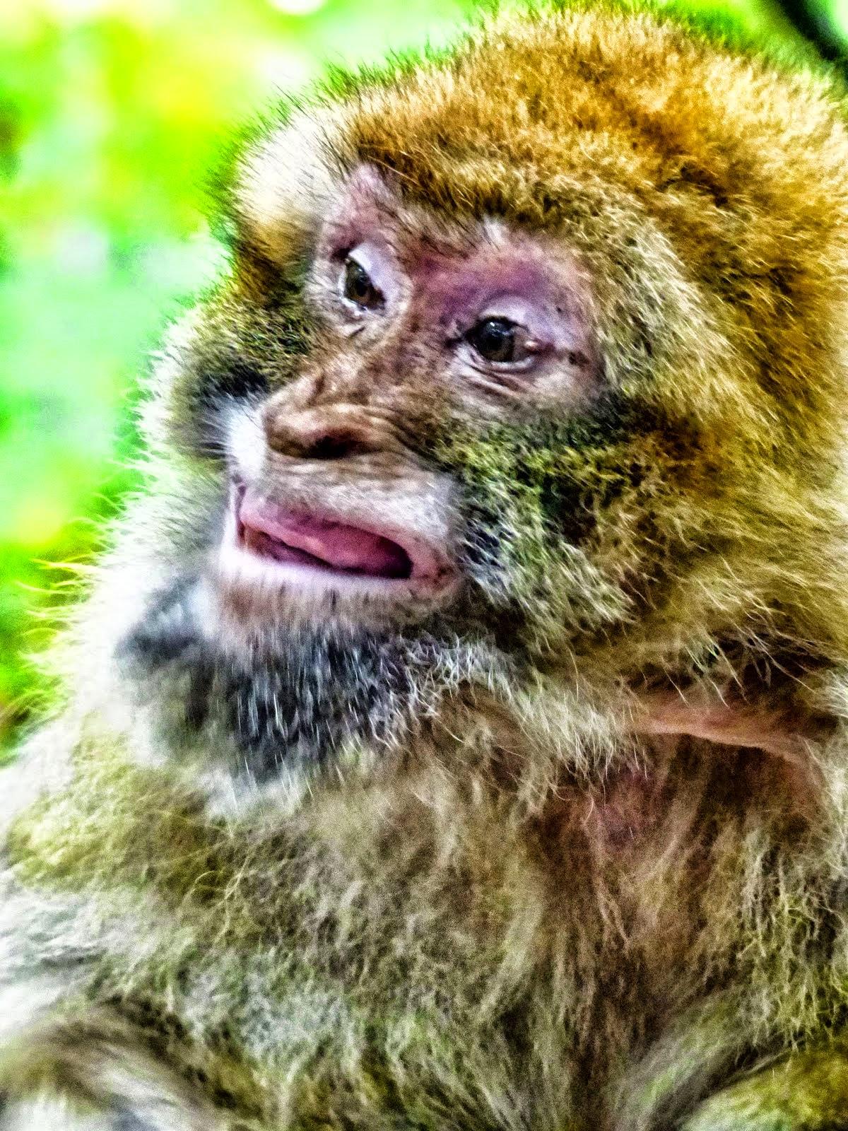 Affeng'sichter