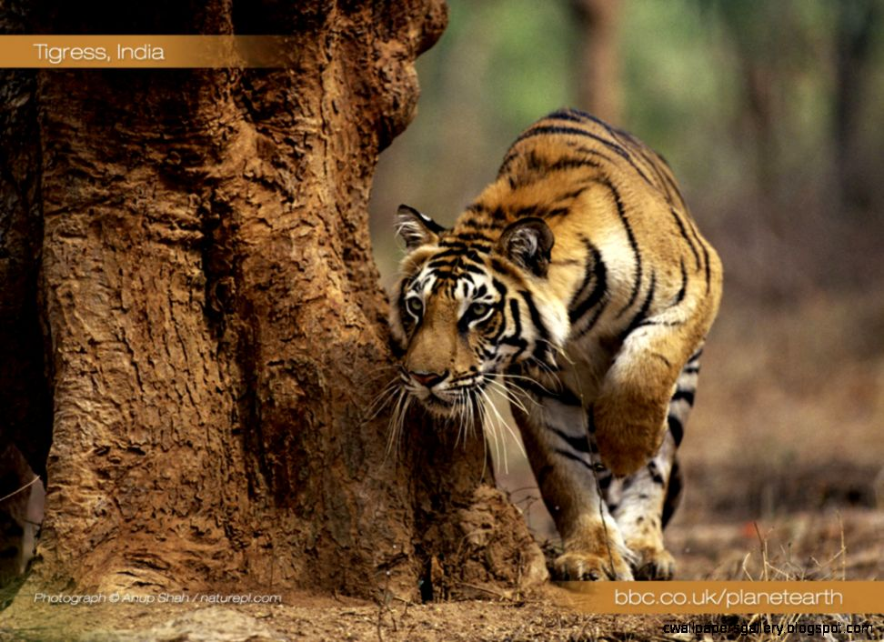 Planet Earth Animals Wallpaper Wallpapers Gallery