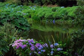 Intresserad av utflykter och resor till trädgårdar? Läs mer om Trädgårdsturistens resor