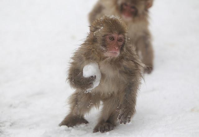 cute-animals-in-snow-007.jpg