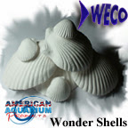 Wonder Shells, Only at American Aquarium Products