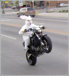 Rabbit on a bike
