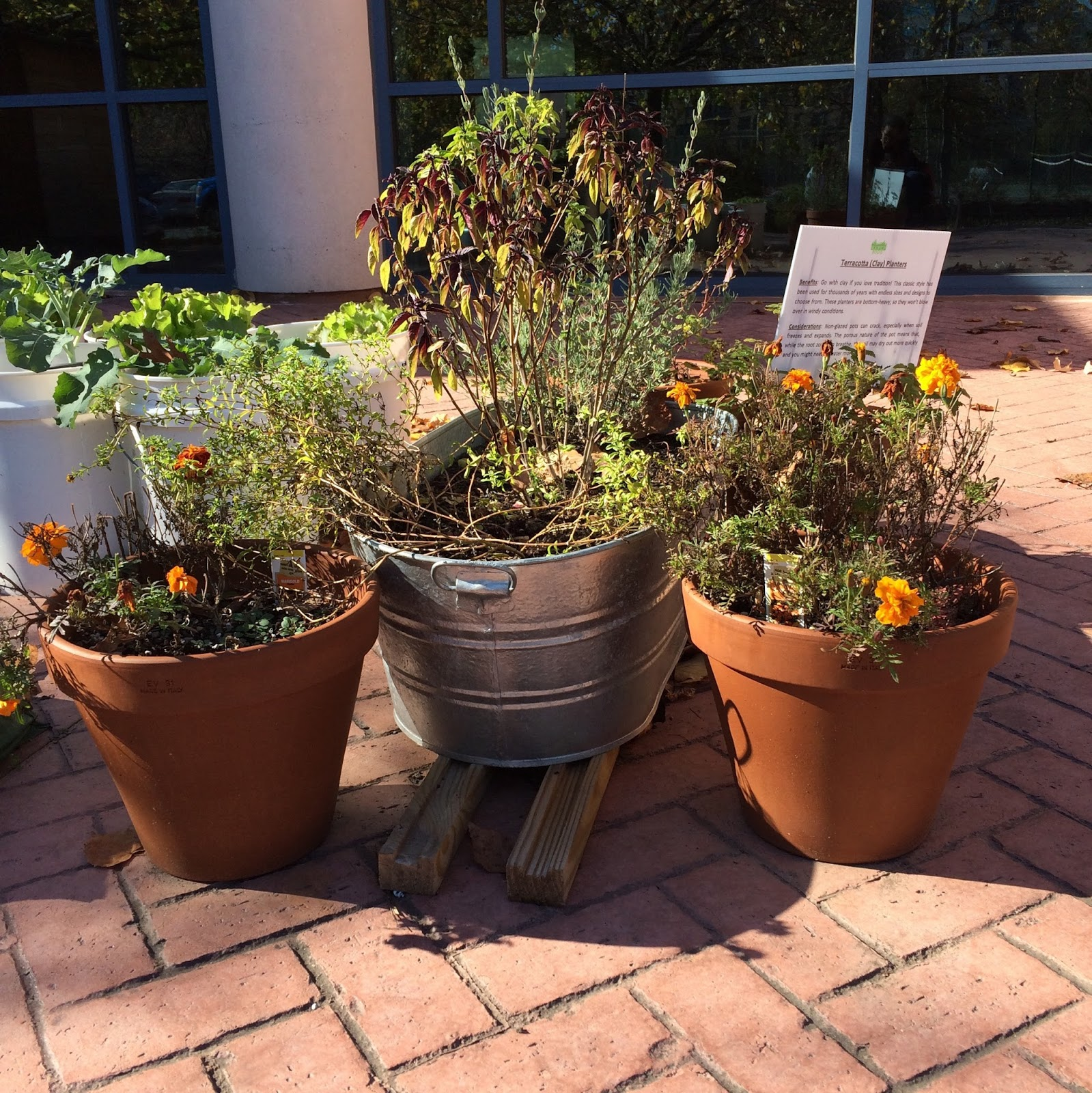 Local Ecologist: Container Gardening: Do You Have a Favorite Method?