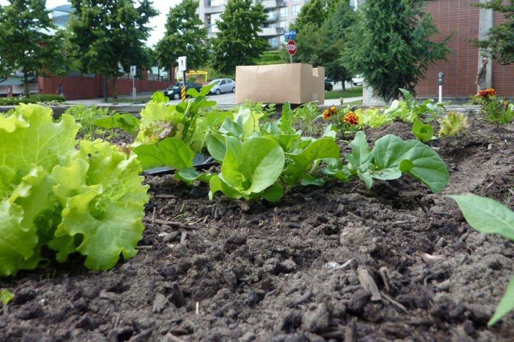 Arte y jardiner a el huerto en casa - Jardineria en casa ...