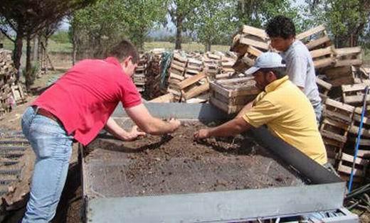 Proyecto pragmalia 327 fomentar el cultivo de azafr n - Como cultivar azafran ...