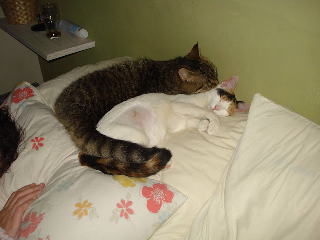 , funny cats, cat photos, cat pictures