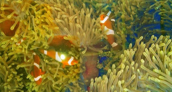 Pesona Bawah Laut Bintan