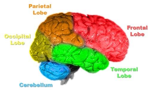 Brain Divisions4
