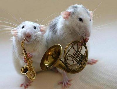 http://3.bp.blogspot.com/-Ic6nm1rQr9M/UXJqqTZkL0I/AAAAAAAACCM/G9oqlfvanMw/s1600/white_rats_orchestra_8.jpg