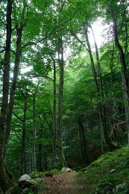 Bosque del Gumial - Ayer - Asturias
