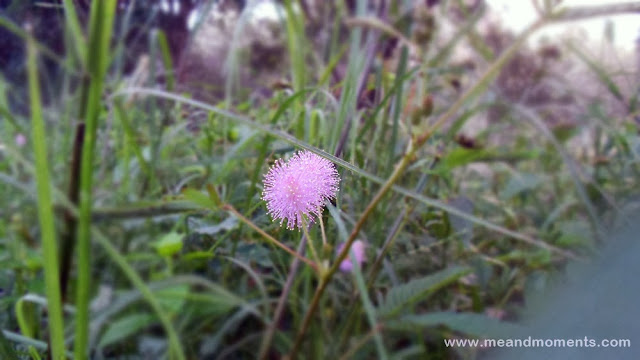 dew on flower, grass flower, purple, morning dew on flower