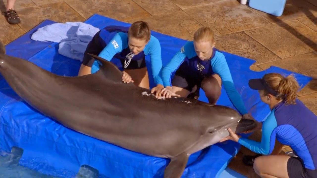Dolphin Tale 2 (2014) S4 s Dolphin Tale 2 (2014)