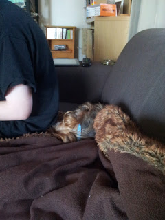 Image: A human sits on the edge of the couch, so as not to disturb Mr Woof who is sleeping behind him.