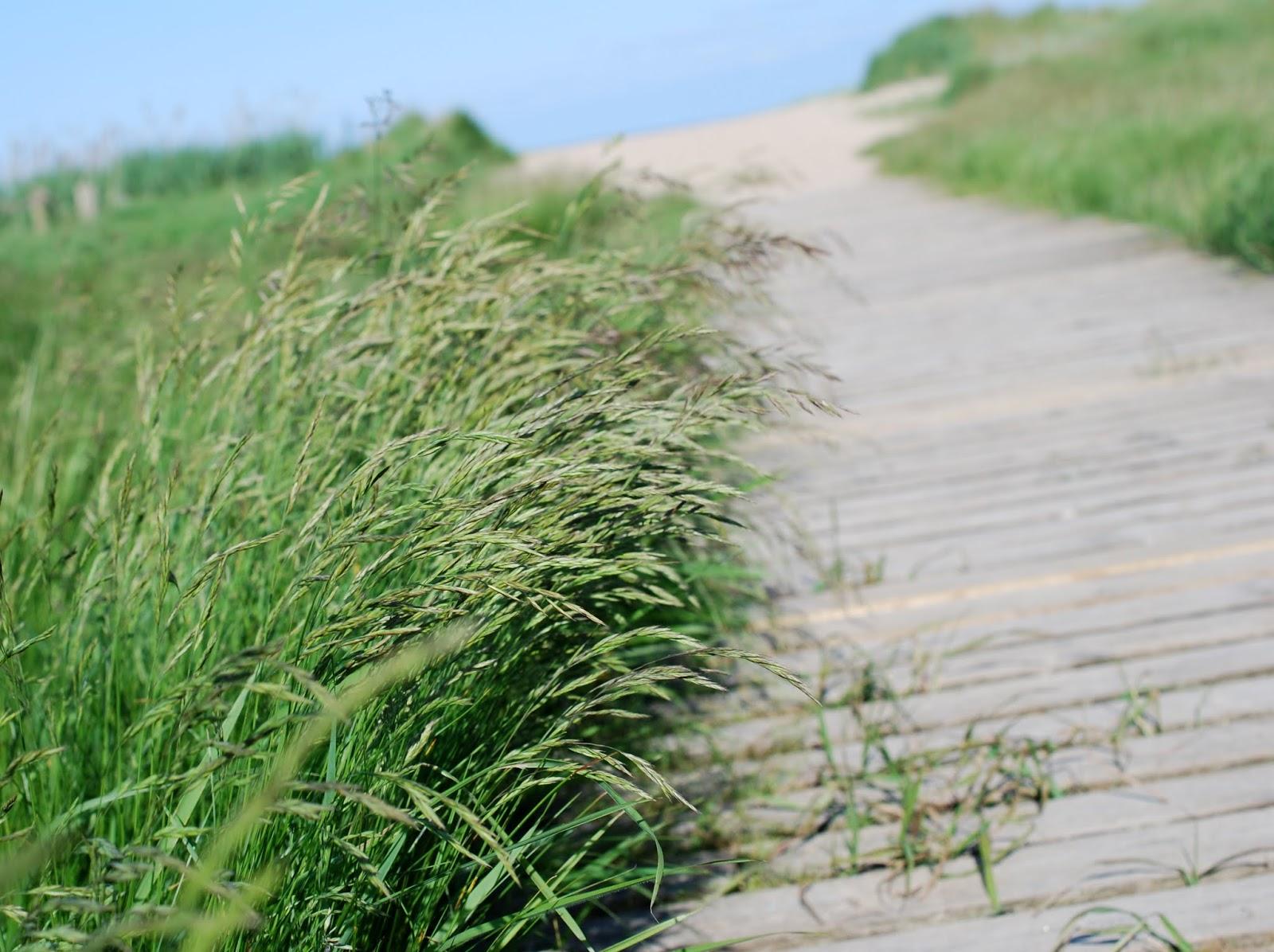 Random Pictures Sommerliebe: Spaziergänge durch die Dünen