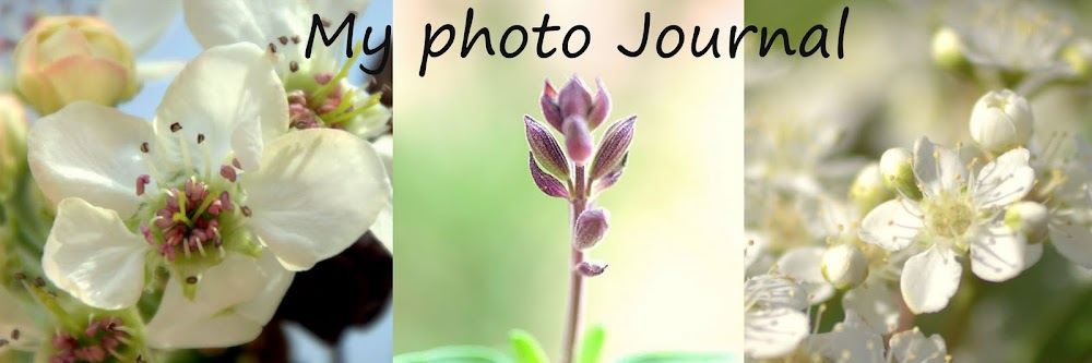 My Photo Journal...
