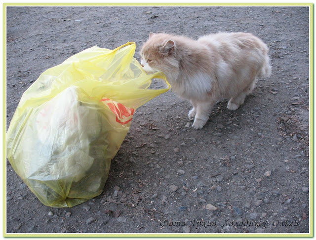 Этот вкусный мусорный пакет....