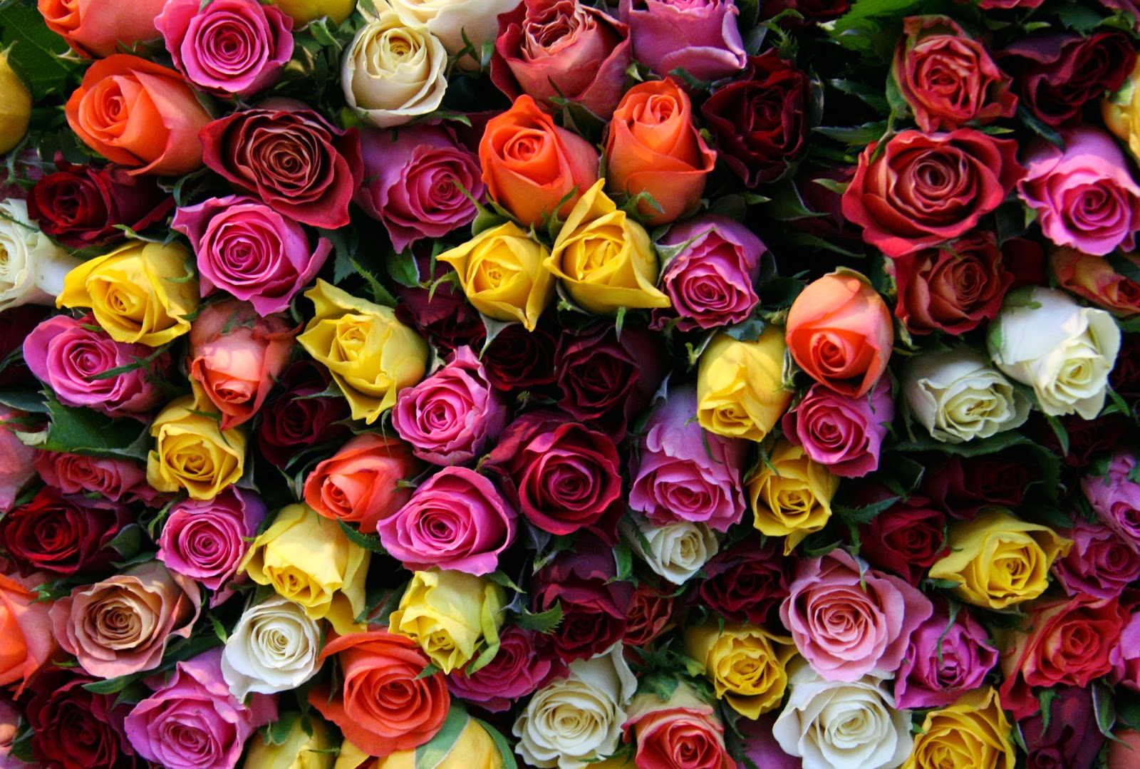 Dont be cheap give her a dozen roses history of roses valentines nothing says i love you like one dozen long stemmed roses except maybe two dozen dont fall for that hype that is expressed in poetry a single rose izmirmasajfo