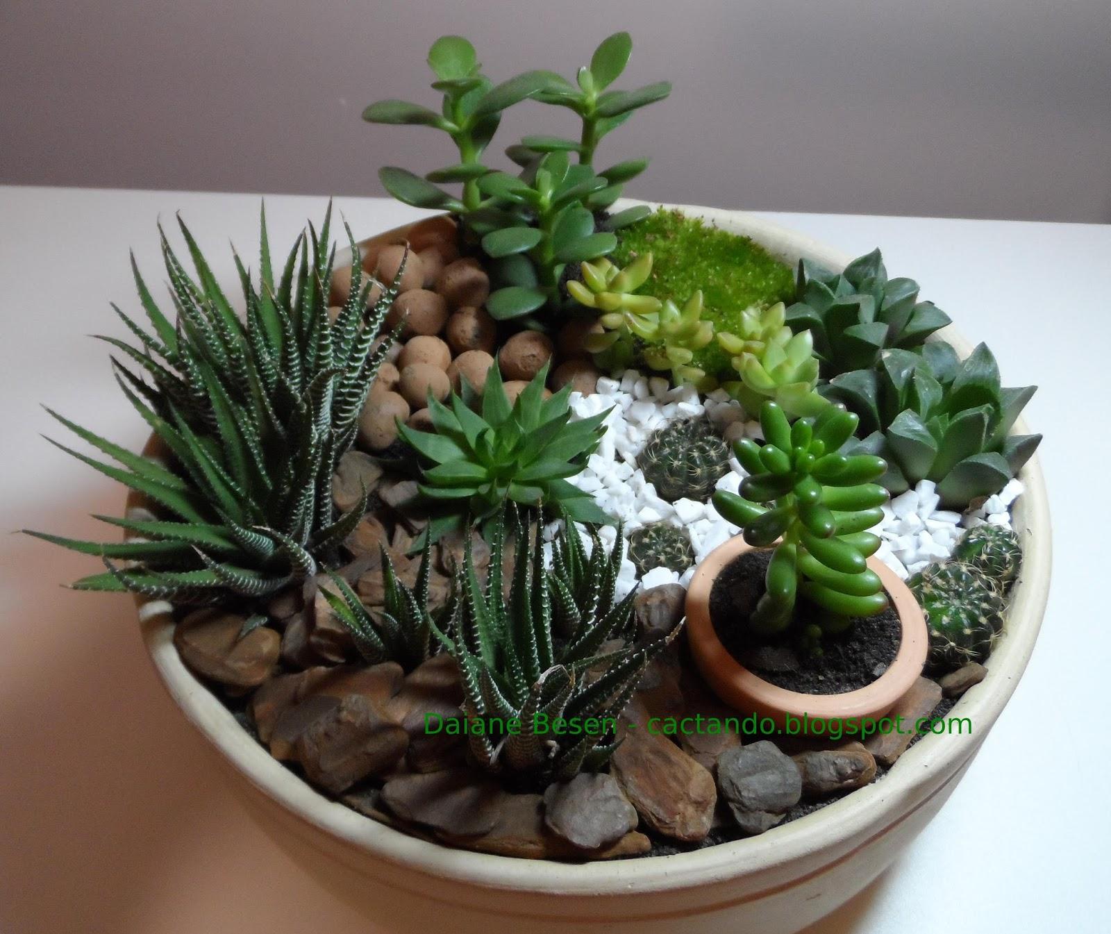 Mini jardim na cer mica - Plantas de interior online ...