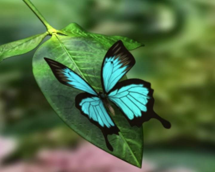beautiful Ulysses butterfly