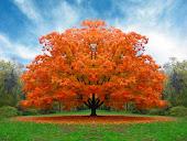 Doce outono