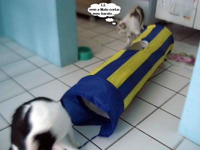 Gata Malu não deixa Gata Lili brincar no túnel divertido para gatos
