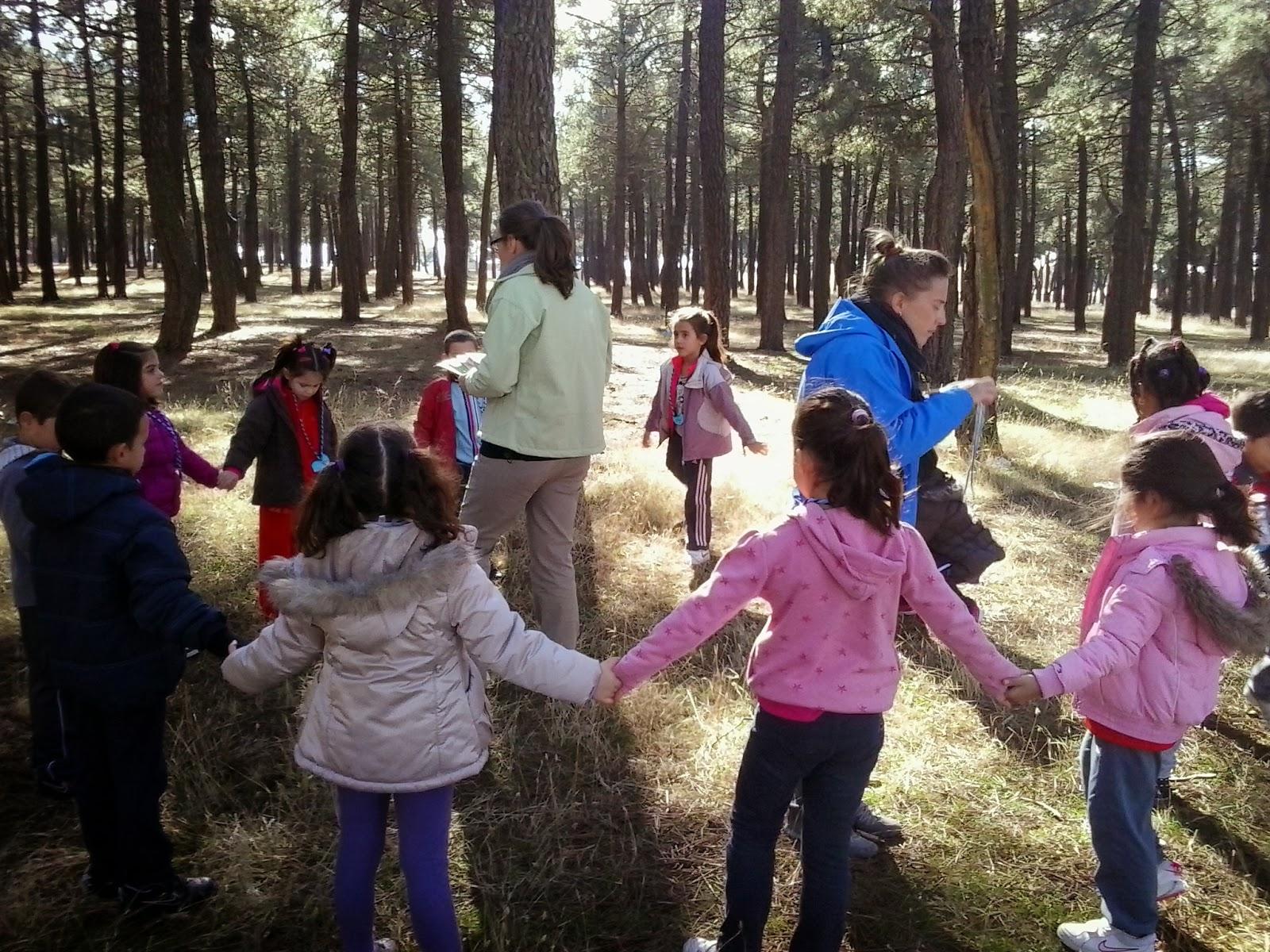 Resultado de imagen para Los árboles son maestros y compañeros de juego