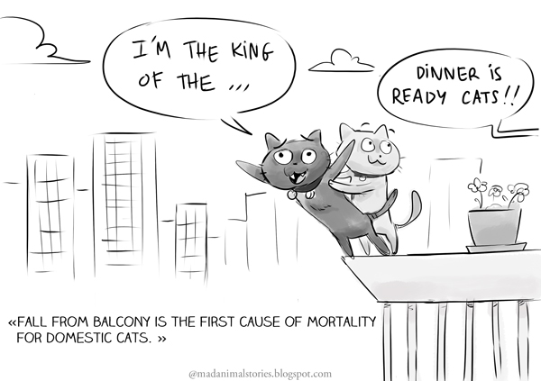 fall from balcony is the first cause of mortality for domestic cats