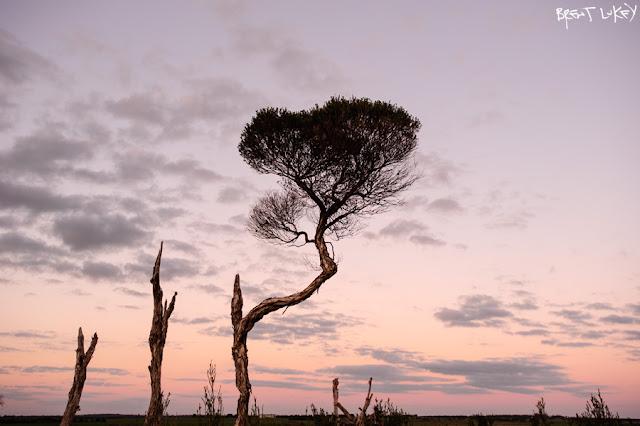 'Tea Tree Sunset' Wonthaggi, Brent Lukey 2012.