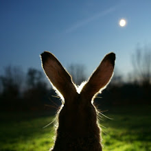 For info on the BEST rabbit food and Care