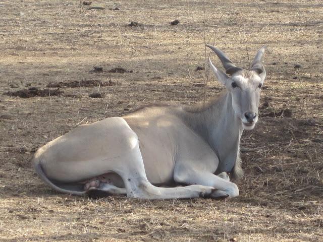 IMG_3160 ▷ La Reserva de Bandia y Accro Baobab Adventures