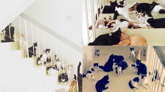 Wanita Bela 48 Ekor Kucing di Rumahnya