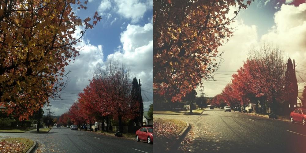 autumn trees on road