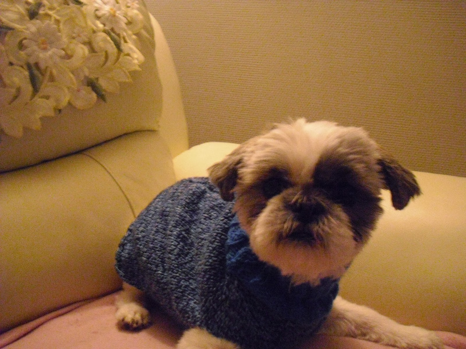 belles en tricot r alisez un magnifique manteau pour votre petit chien. Black Bedroom Furniture Sets. Home Design Ideas