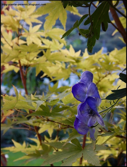 Piante Strane Da Giardino : Un giardino di perenni in ticino nuovi rampicanti