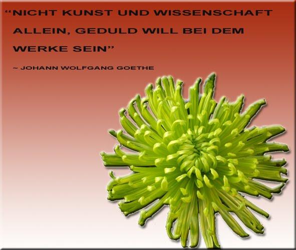 Geduld Zitate | Zitate Freundschaftssprüche Motivation: emeditation.blogspot.com/2011/04/geduld-zitate.html#!