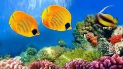 fondali e pesci 21