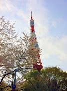今日は工房の外へ出て、東京タワー周辺にお花見に行ってみました。 (img )