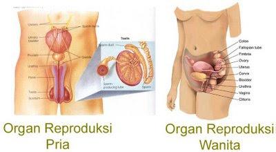 Biologi Gonzaga sistem reproduksi
