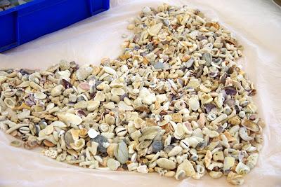 沖縄家族旅行 体験/観光 しっくいシーサー 貝がらサンゴ 色つけ