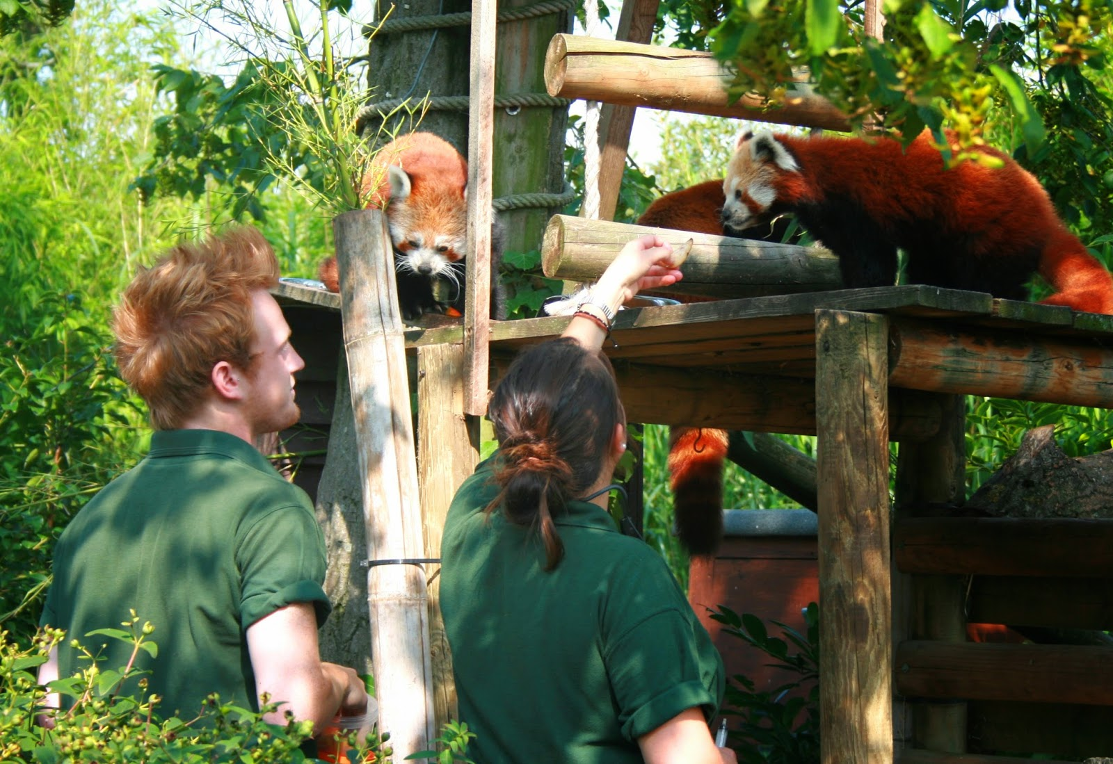 how to become a zookeeper at chester zoo