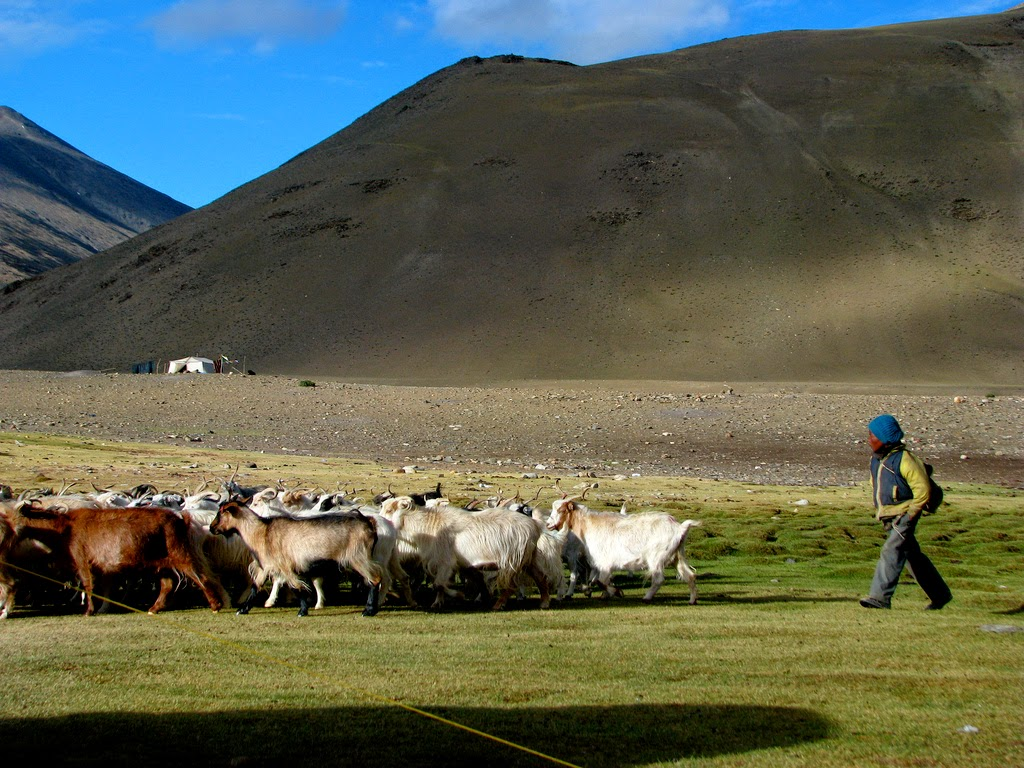 Ladakh volunteer, volunteer travel india