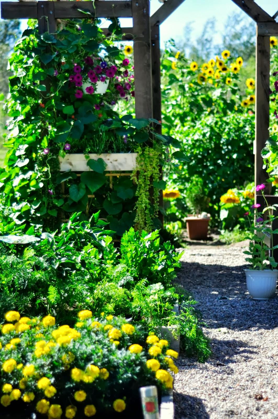 La joie d'apprendre!: .:Dans notre jardin cette semaine:.
