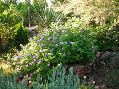 La malvarrosa y el jardinero fiel visita valencia itineris for Malvarrosa planta
