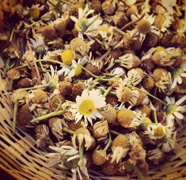 Organic Camomile Flowers Photo Credit: Lucy Corry/The Kitchenmaid