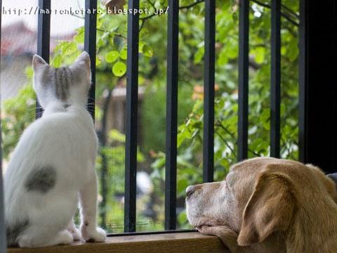 外を眺める犬と子猫