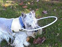 cães cegos