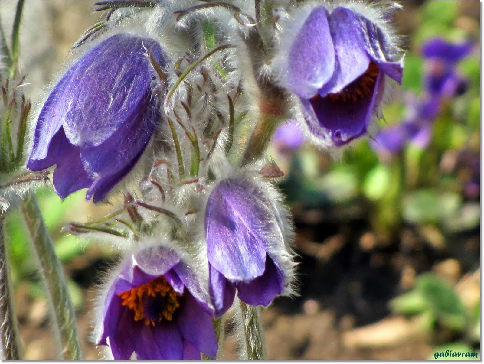Galeria mea cu FLORI (My flowers gallery)