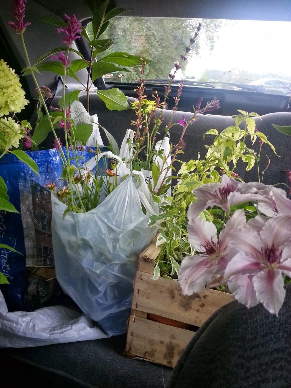 Derri re les murs de mon jardin achats d automne chapitre 1 accord rose blanc vert - Derriere les murs de mon jardin ...