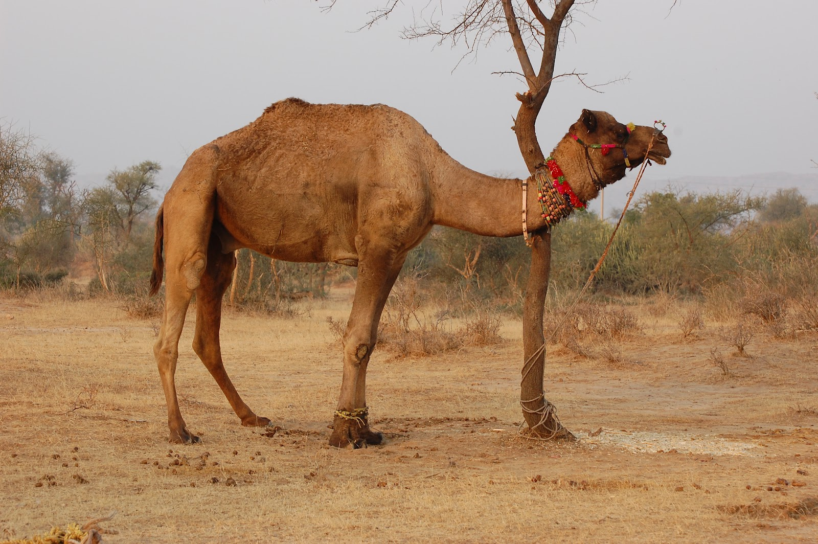 Two Hump Camel http://wildlifeanimalz.blogspot.com/2012/04/camel-facts-and-nice-photos-images.html